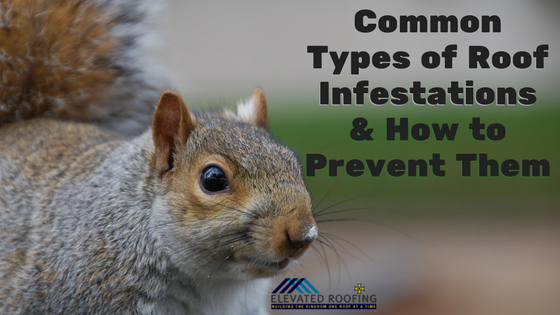 Common Types of Roof Infestations & How to Prevent Them