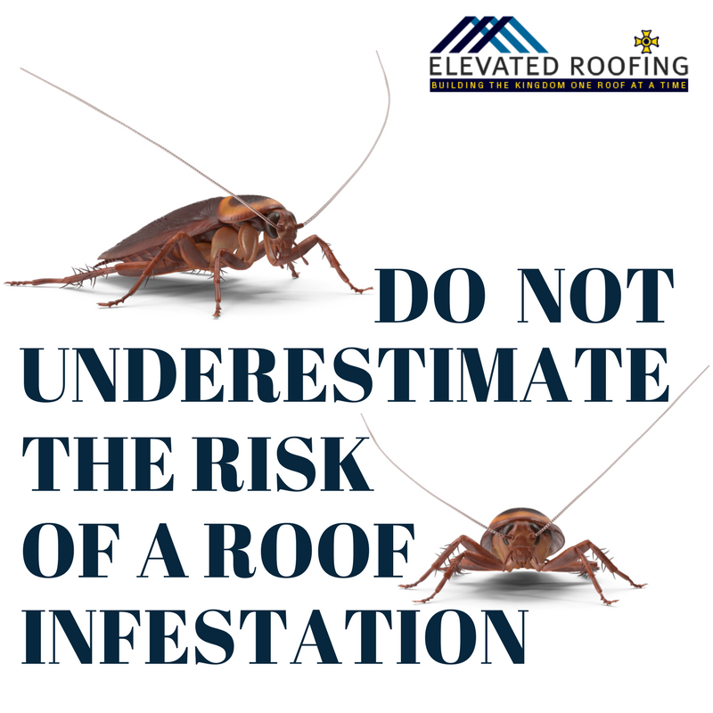 Do not underestimate the risk of a roof infestation