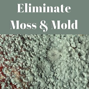 Eliminate Moss & Mold